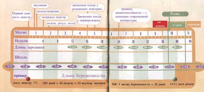 http://august2001.narod.ru/pregn/GK.jpg